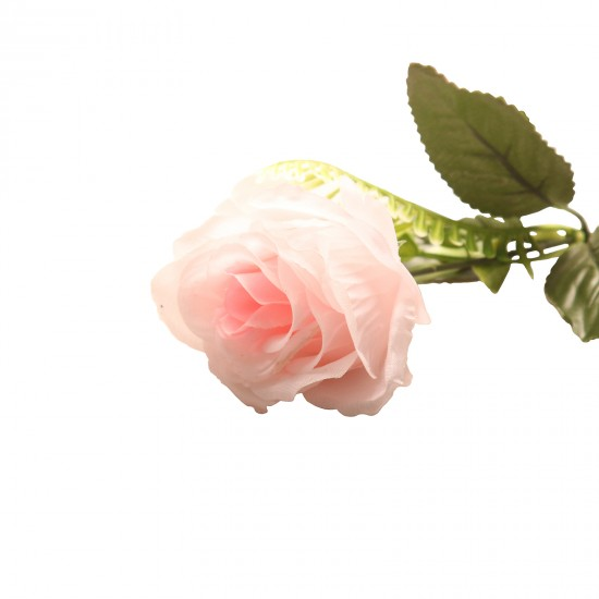 27355449,A bouquet of ten beautiful roses